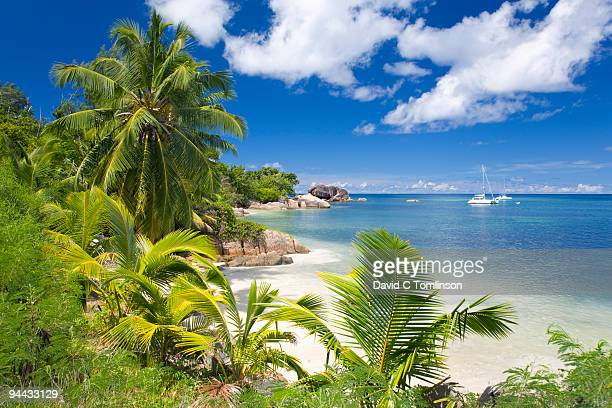 palm-fringed anse bateau, praslin, seychelles - seychelles stock pictures, royalty-free photos & images