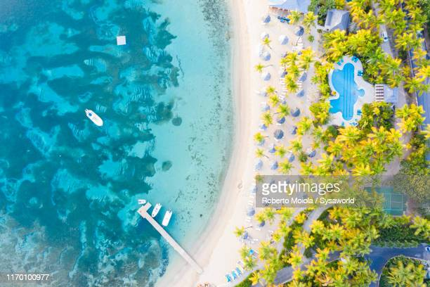 palm-fringed beach from above, caribbean sea - paisajes de republica dominicana fotografías e imágenes de stock