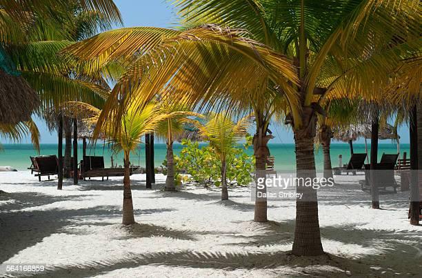 Palm-fringed beach on Holbox Island, Mexico
