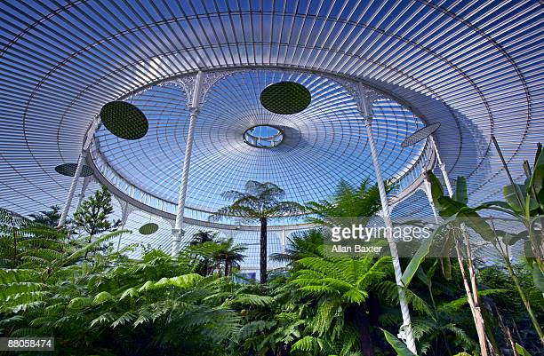 palmhouse - botanical garden stock pictures, royalty-free photos & images