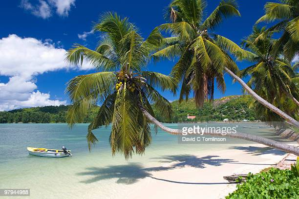 palm-lined bay, baie ste anne, praslin, seychelles - seychelles stock pictures, royalty-free photos & images