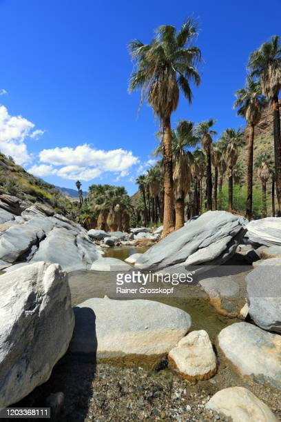 palms along a small creek between rocks - rainer grosskopf stock pictures, royalty-free photos & images