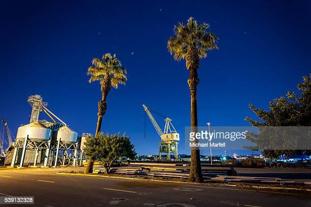Palms and Crane