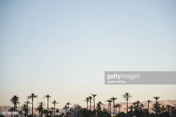 Palms and hills