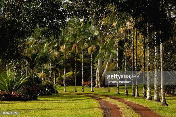 palms and other tropical plants line roadway - timothy hearsum imagens e fotografias de stock