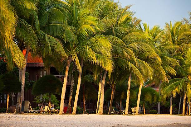 Palms and resort on beach.