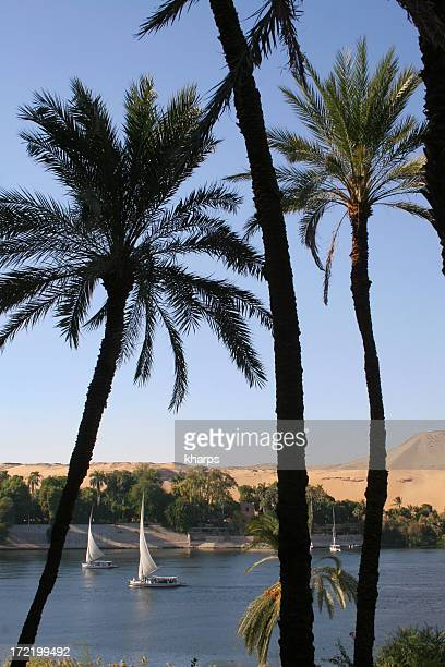 Palms and sail boats on the Nile, Aswan, Egypt