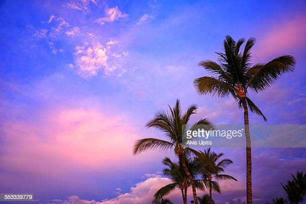 Palms and sunset glow in Hawaii