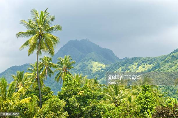 palms at rainy season in bali - indonesia - tropical music stock photos and pictures