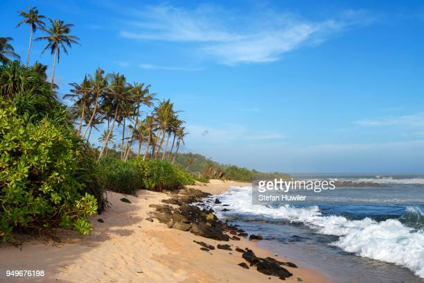 palms at sandy beach with surf, indian ocean, mirissa, south province, sri lanka - lanka stock pictures, royalty-free photos & images