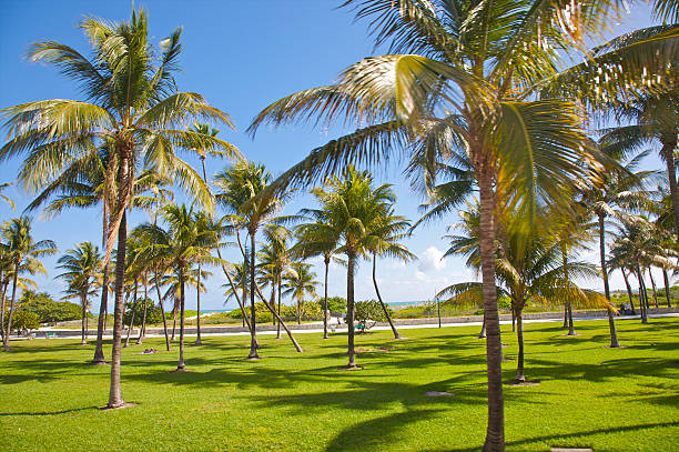 Palms, green lawn and blue sky in resort
