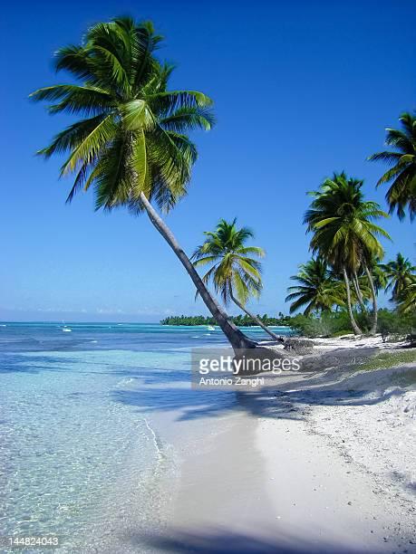 Palms in beach