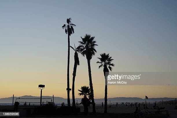 palms in hermosa - hermosa beach stock pictures, royalty-free photos & images
