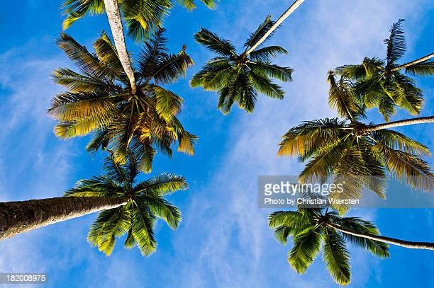 Palms in St. Lucia