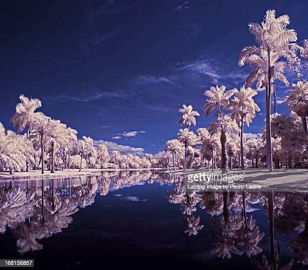 Palms in the Lowland, Fairchild Tropical Botanic G