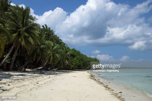 palms lining the tropical sandy beach of havelock island, andaman sea, indian ocean - lagoon stock pictures, royalty-free photos & images