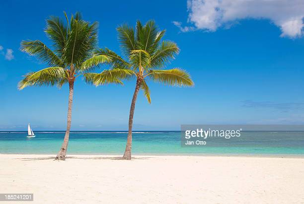 palms on mauritius - palm stock photos and pictures