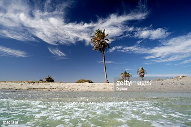 palms on the beach, djerba island, tunisia, maghreb, north africa, africa - djerba stock pictures, royalty-free photos & images