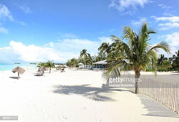 Palms on the beach on November 15 2008 in Treasure Cay Bahamas