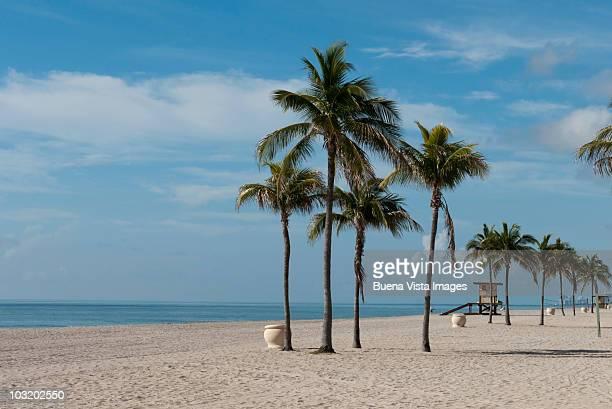 palms on the beach - フロリダ州ハリウッド ストックフォトと画像