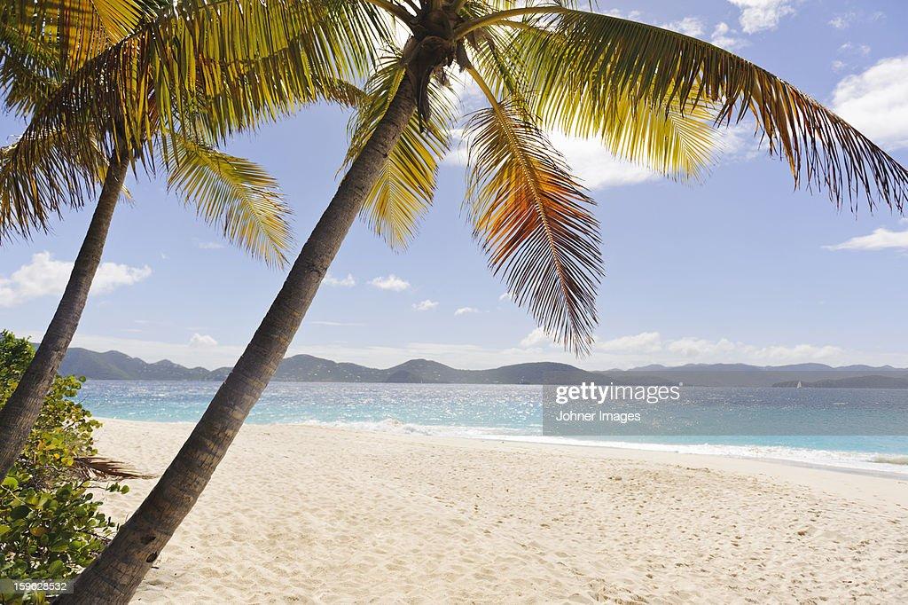 Palms over sandy beach : Stock Photo
