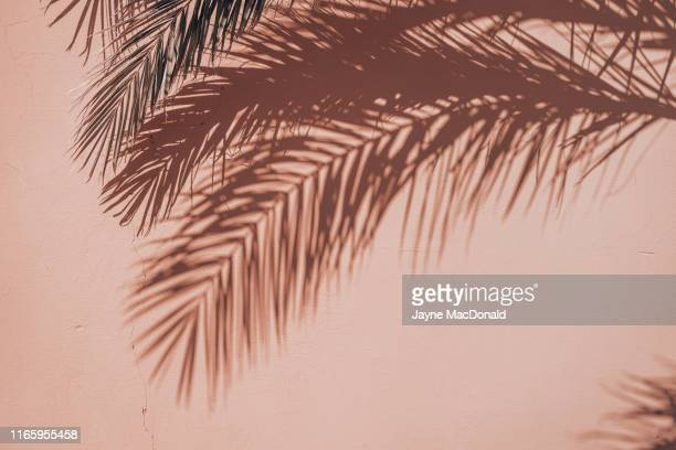 palms - shadow stock pictures, royalty-free photos & images