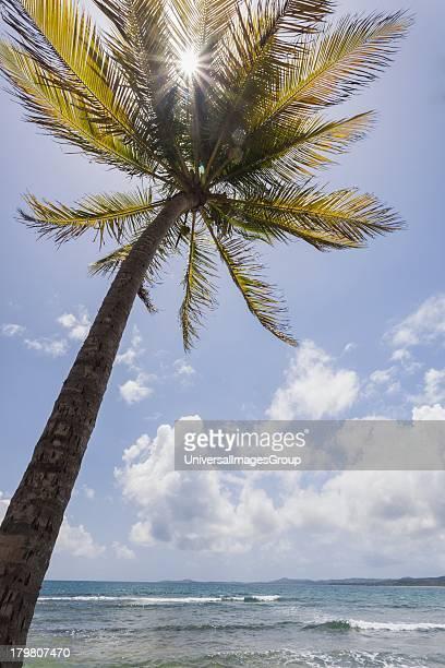 Palms trees along Luquillo Beach Puerto Rico