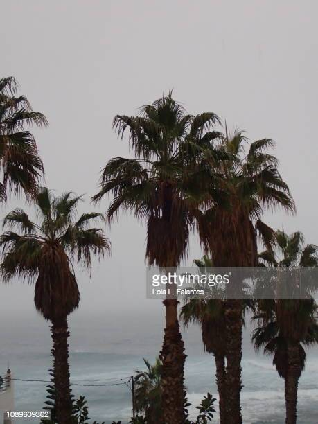 Palms trees and Atlantic Ocean