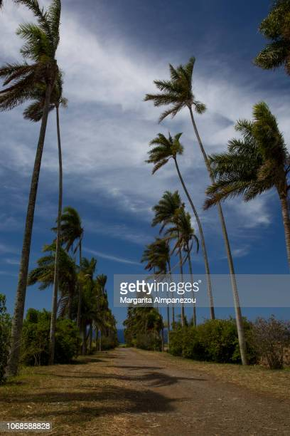 Palms trees and blue sky at Reunion Island