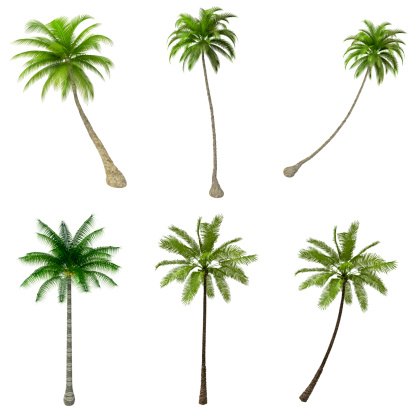 Palms Trees COLLECTION / SET on Pure White Background (72MPx-XXXL) 170030274
