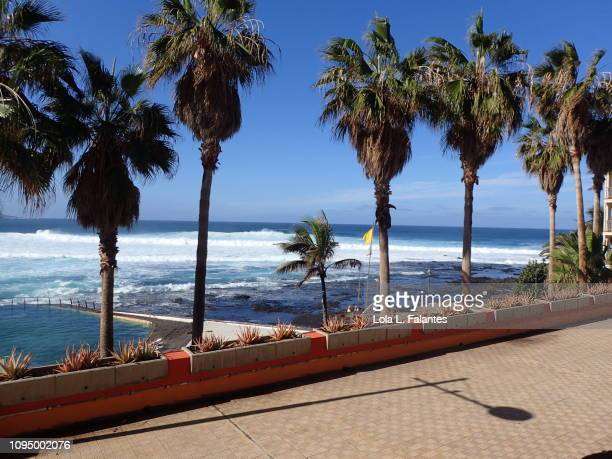 Palms trees in Tenerife nord coastline