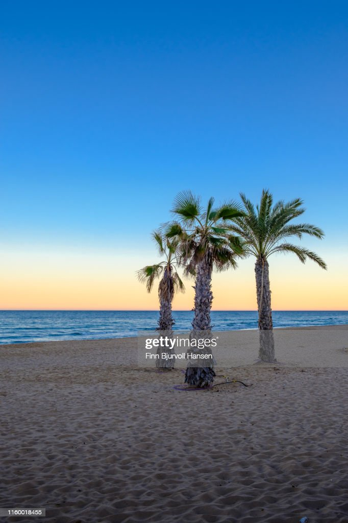 Palmtrees at a beach at sunset with the ocean in the backgroung : Stock Photo
