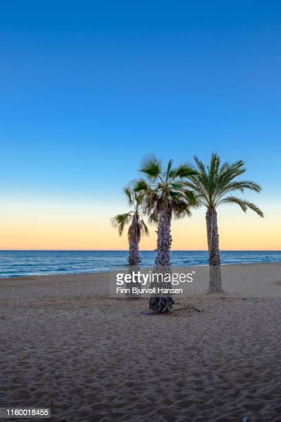 palmtrees at a beach at sunset with the ocean in the backgroung - finn bjurvoll stockfoto's en -beelden
