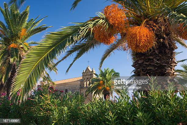 Palm-trees, the Church of Agios Nikolaos