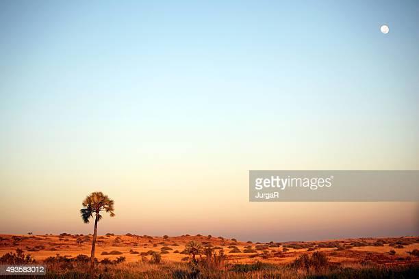Palmwag paysage au coucher du soleil, Namibie Afrique