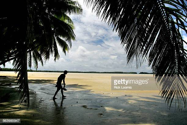 Palmyra Atoll – Palm trees dominate much of the landscape around Palmyra Atoll located in a remote area of the Pacific Ocean The island has no...