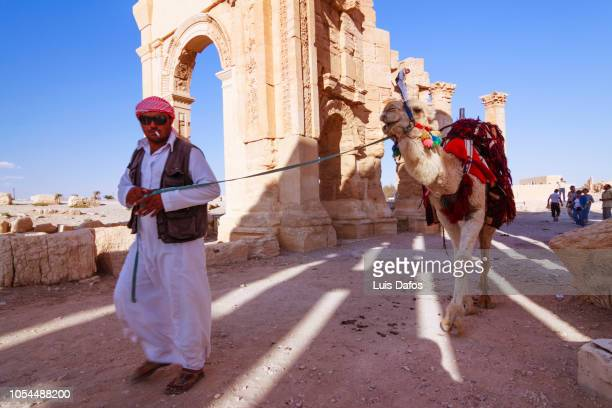 palmyra, bedouin with camel - arch of septimus severus stock pictures, royalty-free photos & images