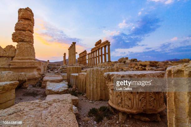 palmyra, great colonnade at sunset - historical geopolitical location stock photos and pictures