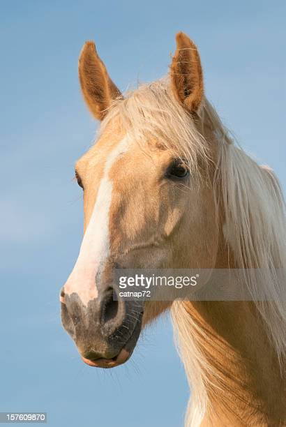 Palomino Horse Head Shot with Windblown Mane Hair