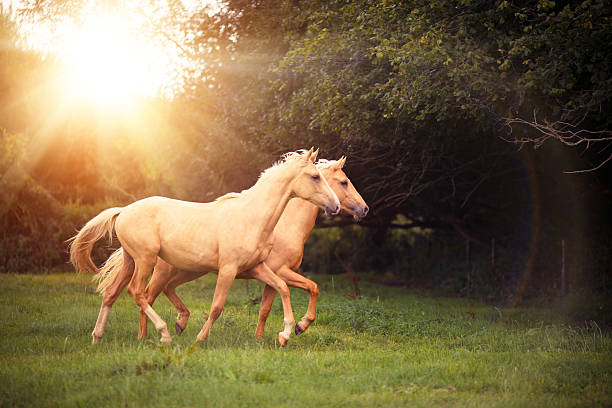 Palomino Horses Wall Art