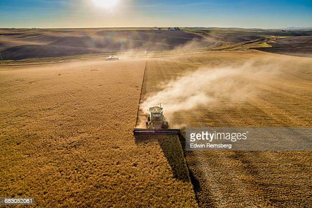 palouse harvest time - cereal plant stock pictures, royalty-free photos & images