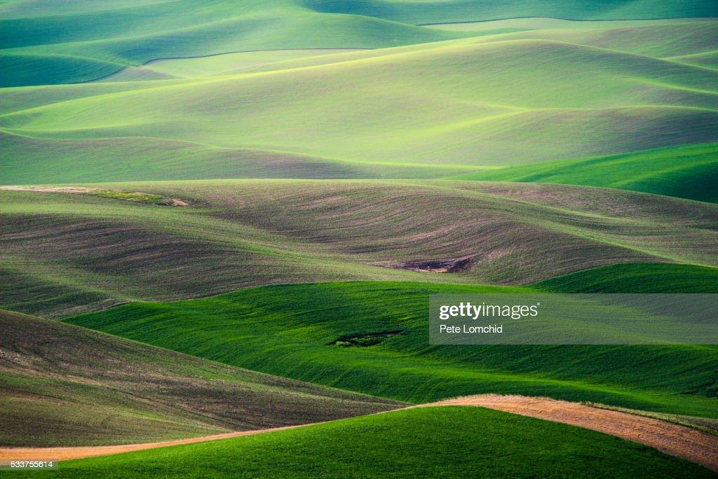 Palouse hill : Foto stock