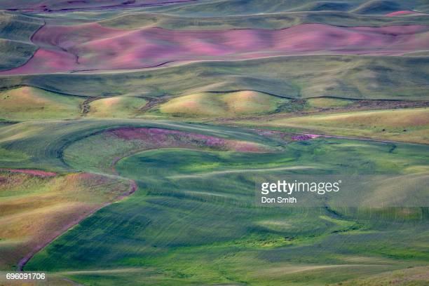 palouse hills and color - don smith imagens e fotografias de stock