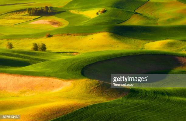 palouse hills from steptoe butte state park at sunrise, washington - pullman stock photos and pictures