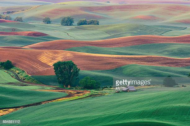 palouse pastels - washington state stock pictures, royalty-free photos & images