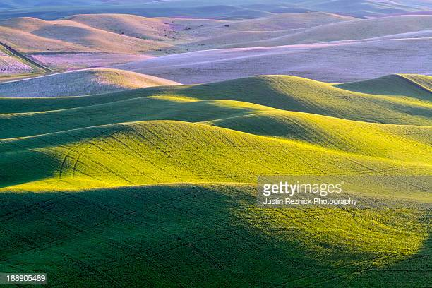 Palouse Rolling Hills
