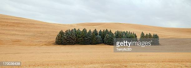 palouse trees and field panorama - terryfic3d stock pictures, royalty-free photos & images