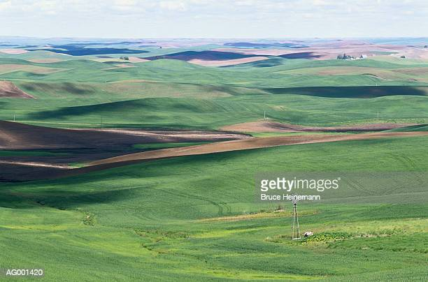 palouse wheatfields - american style windmill stock pictures, royalty-free photos & images
