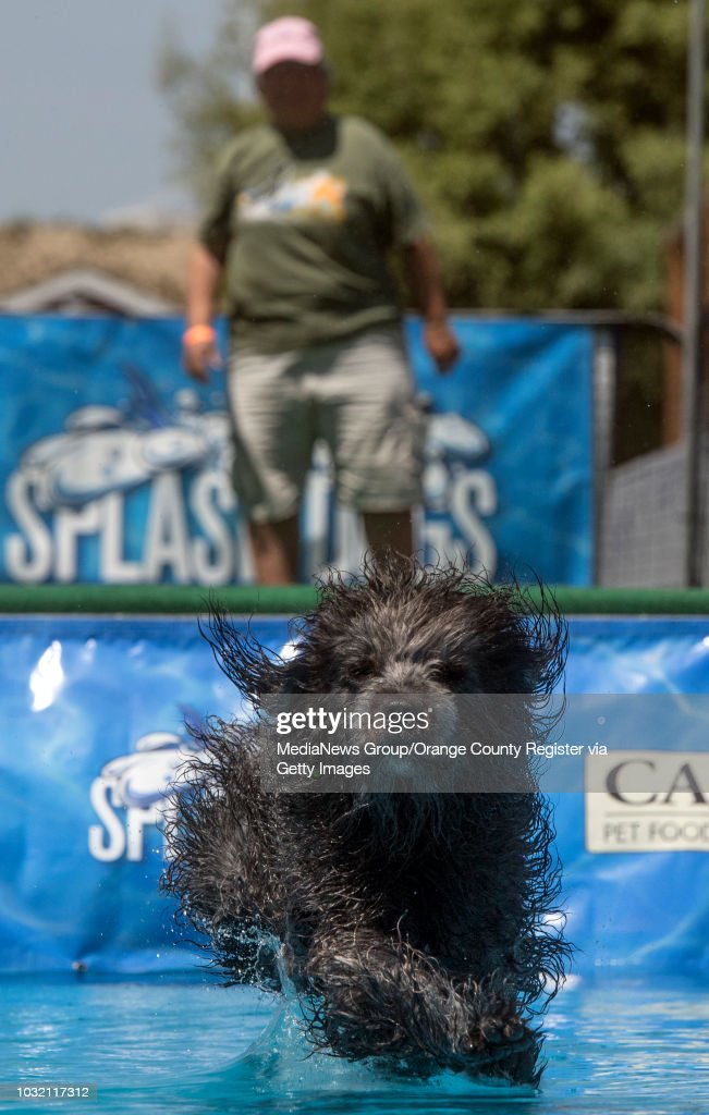 Pam Lucido watches as her dog, Lani, a labradoodle from