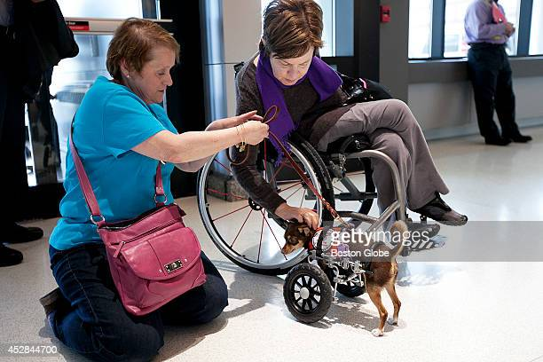Pamela Daly a counselor for support groups with the Greater Boston Chapter of the National Spinal Cord Injury Association greeted Echo a twolegged...